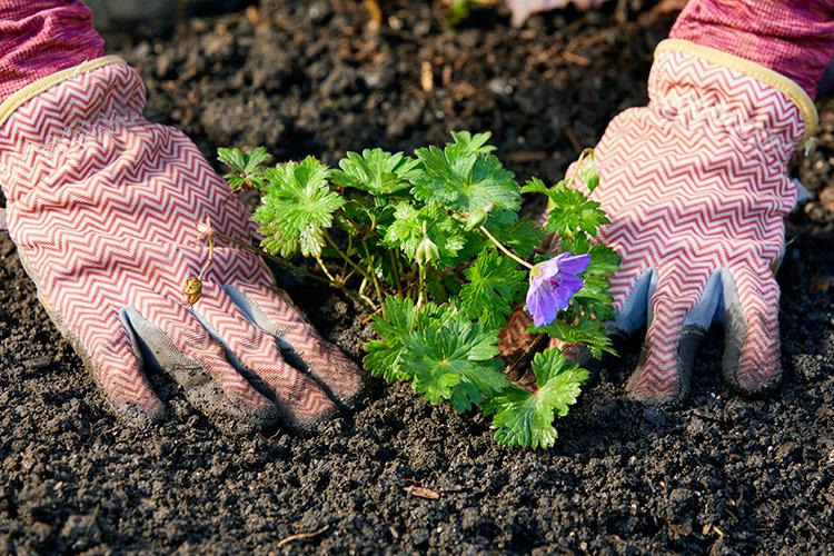 Verter fun der Vokh – Gardening